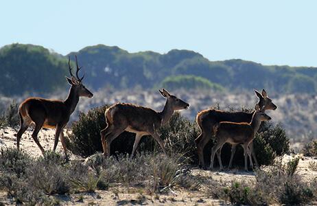 Wildlife in Spain's national park