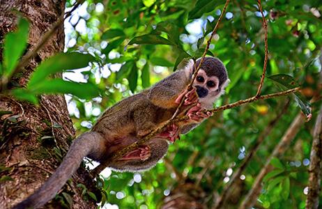 monkey sitting on a branch