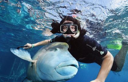 Student snorkeling in Australia