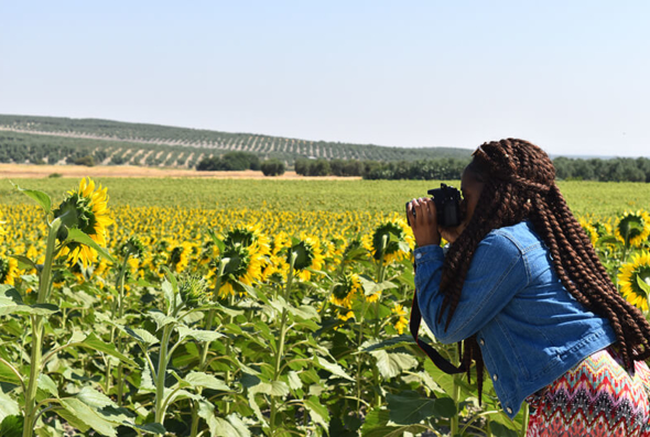 Student photographing Spanish sunflower field